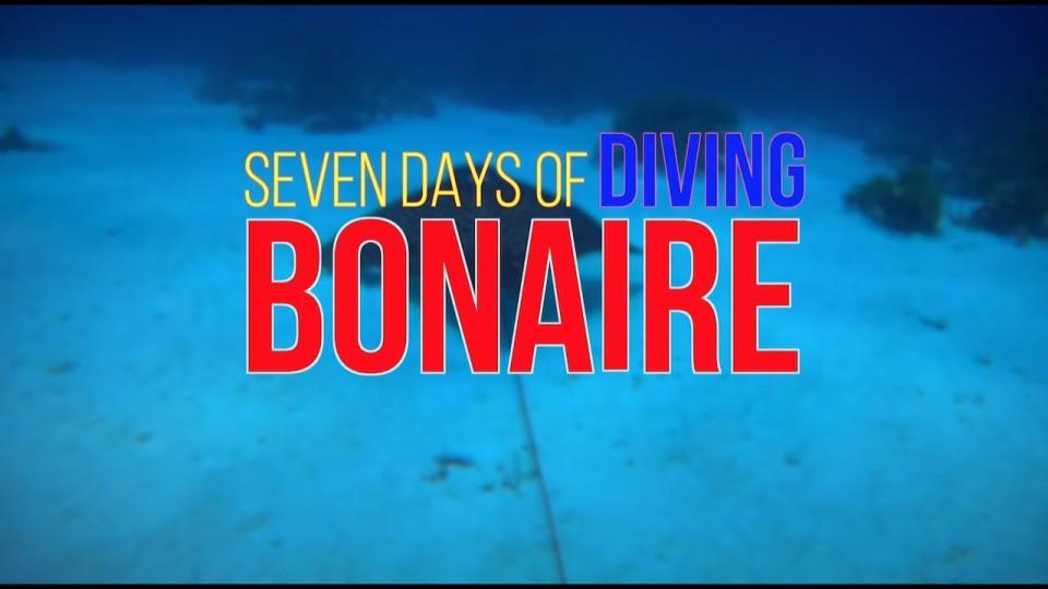 Seven Days of Diving Bonaire