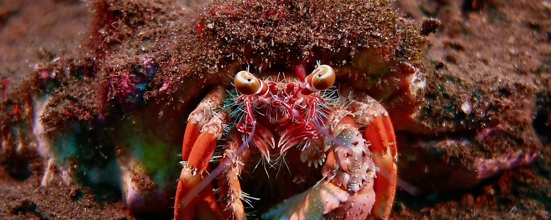 Crab Indonesia