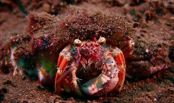 Crab Indonesia