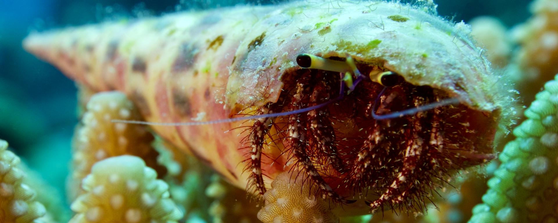 hermit crab sitting on coral