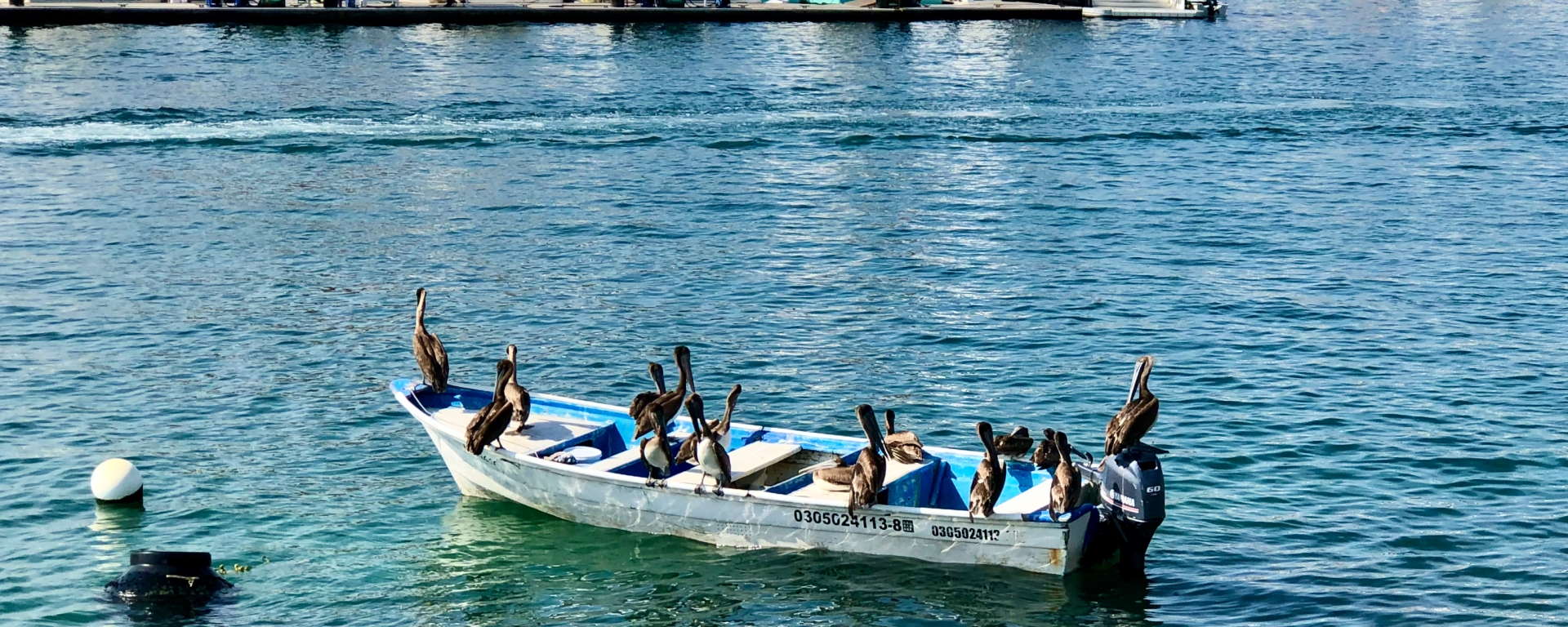 Seabirds on a boat in the cabo san lucas marina